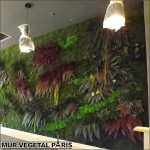 Mur-vegetal-stabilise-paris-thai-basilic-la-villette-2