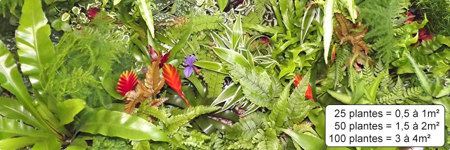 Plantes pour mur végétal