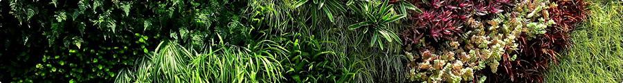 Conseils mur végétal