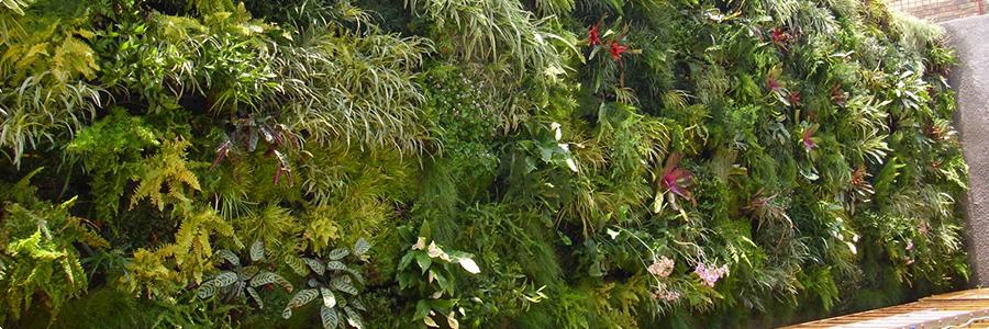 Conseils pour la cr ation d 39 un mur v g tal mur v g tal info for Comment faire un mur vegetal