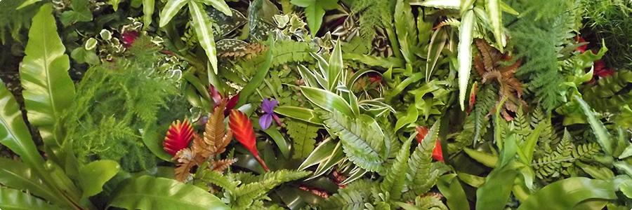 Fiches plantes pour mur végétal