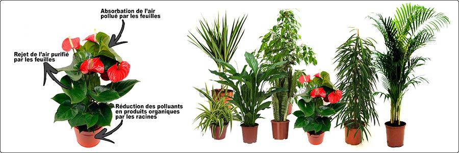 Les Plantes Depolluantes Pour Assainir L Air Mur Vegetal Info