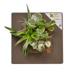 Cadre simple artichaud