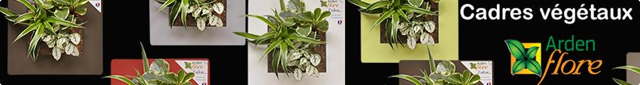 Présentation Cadre végétal Arden Flore 1