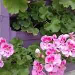 La Brique Verte mur végétal extérieur