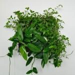 La Brique Verte mur végétal intérieur