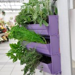 La Brique Verte mur végétal aromates