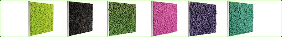 Tableaux végétaux stabilisés en lichen scandinave