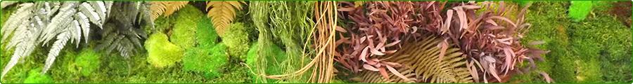 Mur végétal stabilisé d'intérieur sans entretien