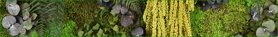 Présentation Tableau végétal stabilisé Tablo'Nature