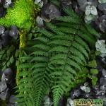 Tablo'Nature Green Eucalyptus 25x25cm