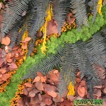 Tablo'Nature Orange Eucalyptus