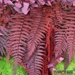 Tablo'Nature Red Eucalyptus 60x60cm