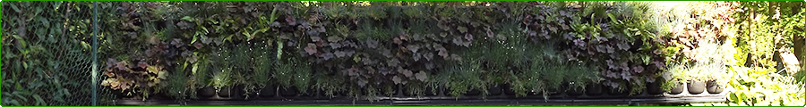 Création d'un mur végétal extérieur Flowall 1