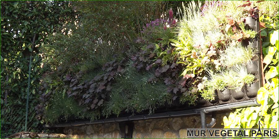 Création d'un mur végétal extérieur Flowall 3